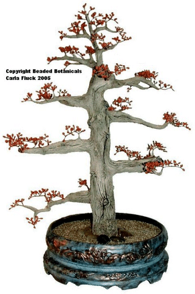 Bonsai Maple in Springtime