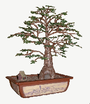 Beaded Flowers - Old Man Bonsai